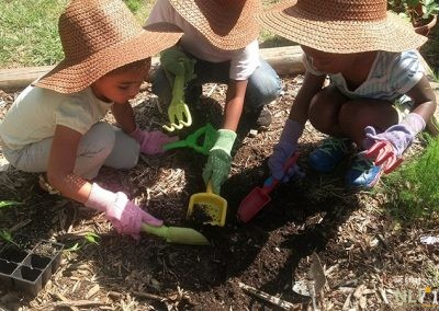 Planting bell peppers in the fruit and vegetable garden
