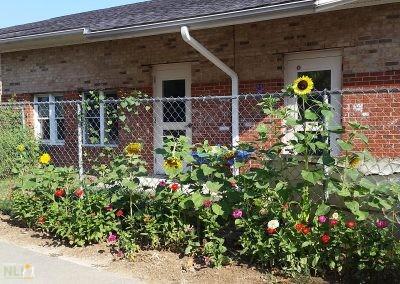 Pollinator garden along the fence