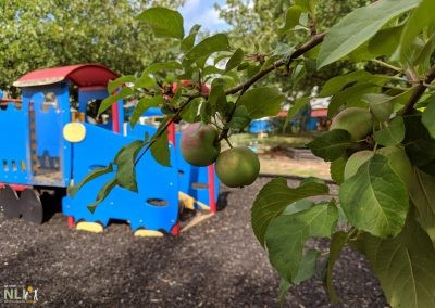 Apple tree planting beside play equipment