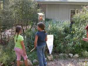 Creating Wildlife Gardens