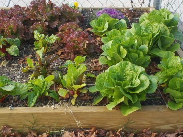 Children's Vegetable Gardens: Introduction