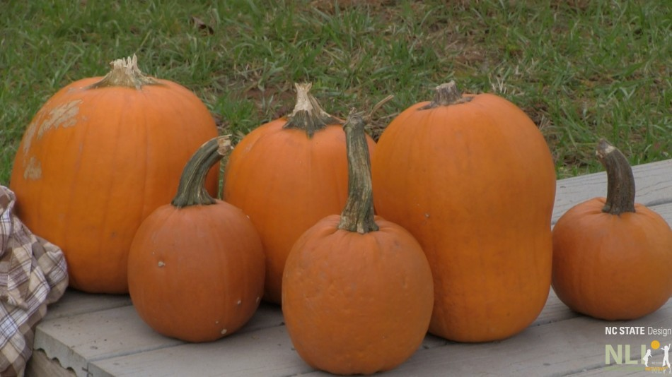 Beyond the Jack O' Lantern: Using Pumpkins to Support Learning
