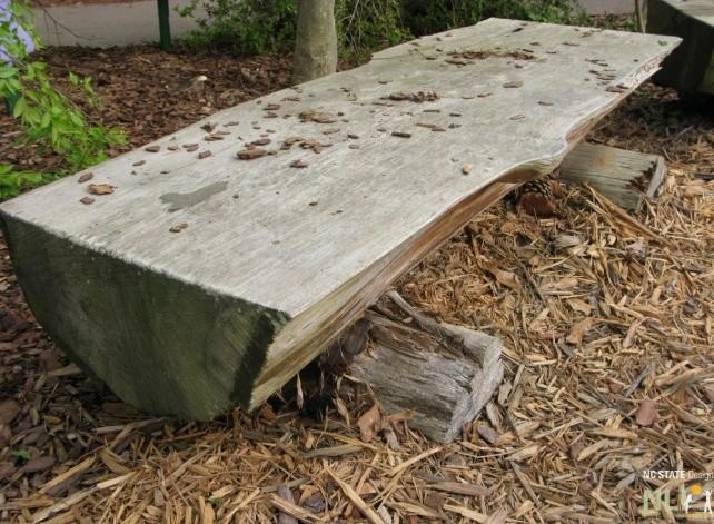 Bench Wood Natural log Atlanta Botanical Garden 0081_0