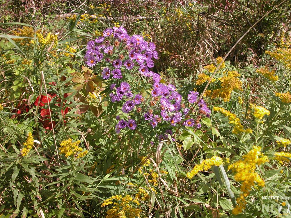 Ithaca-wildflowersDSCN4512