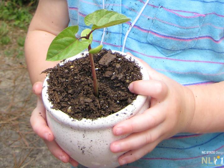 Jax Mont_seedling_crop_0820