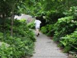 Teardrop Park, NYC
