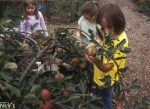 Edible Plants for Play and Learning