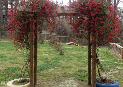 Arbor with native coral honeysuckle