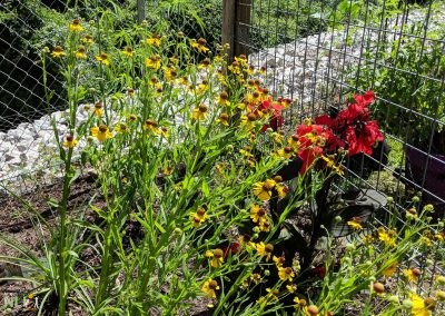 Colorful flowering perennials in the sensory garden