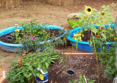 Launching a low-cost garden in three steps