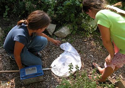 Creating a Wildlife Garden